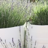 Photo of A Pinch of Lavender LLC Palisade CO