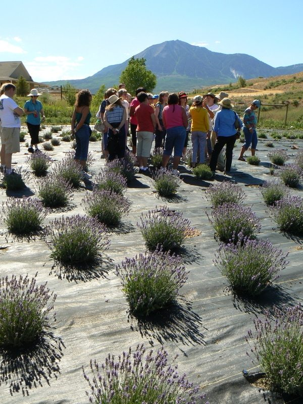 Photo of Lavender Association of Western Colorado Festival Friday Farm Tour Palisade, Colorado Mesa County