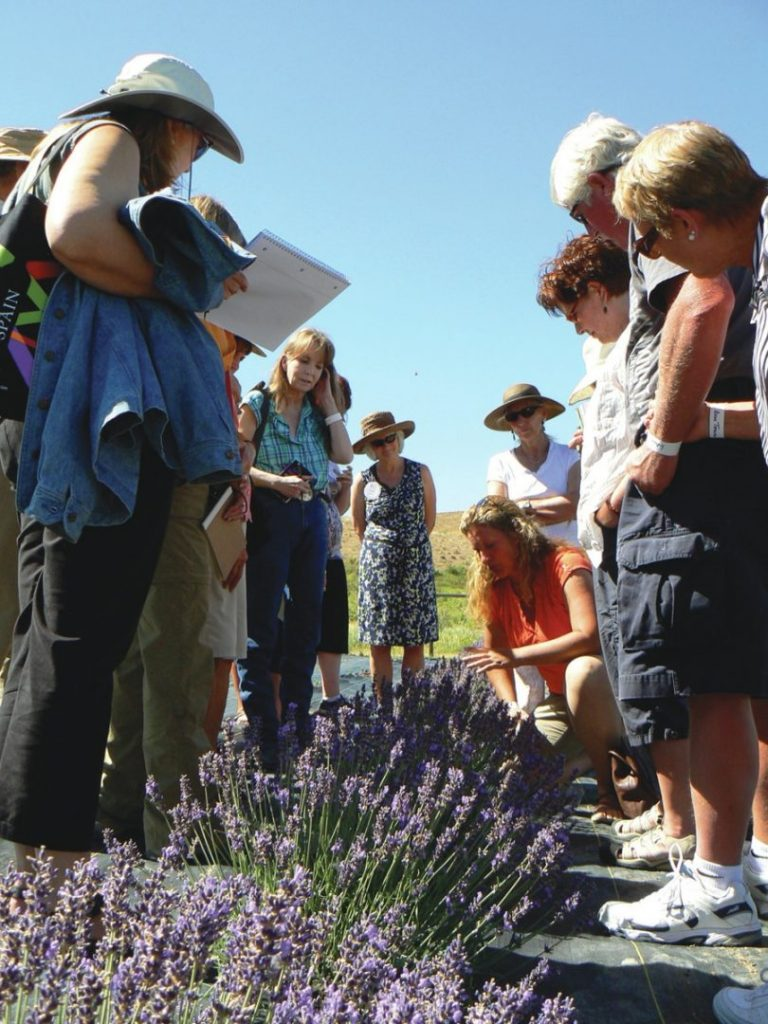 Photo of Lavender Association of Western Colorado Festival Palisade, Colorado Mesa County