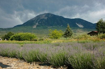 lavender-and-mountain.jpg