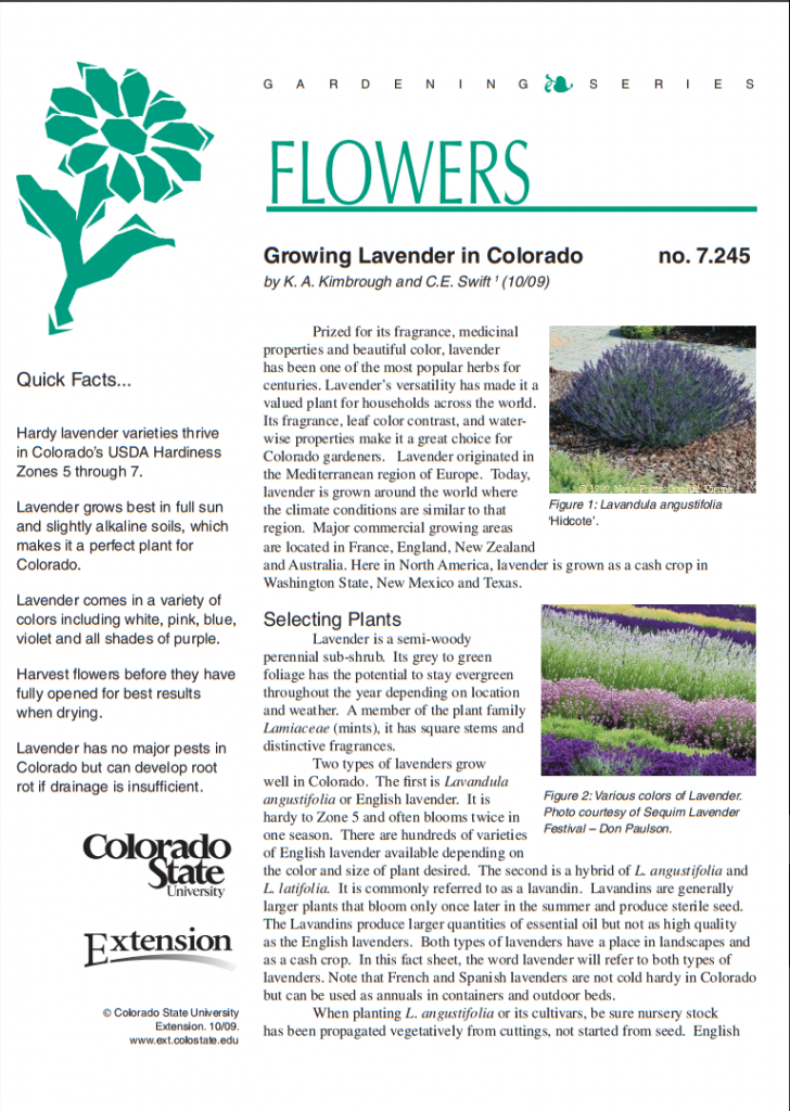 Photo of Lavender Association of Western Colorado Fact Sheet from CSU